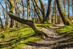 Nationalpark Eifel mit Wanderweg